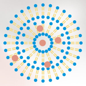 1. Physiologische Hautpflege Liposom